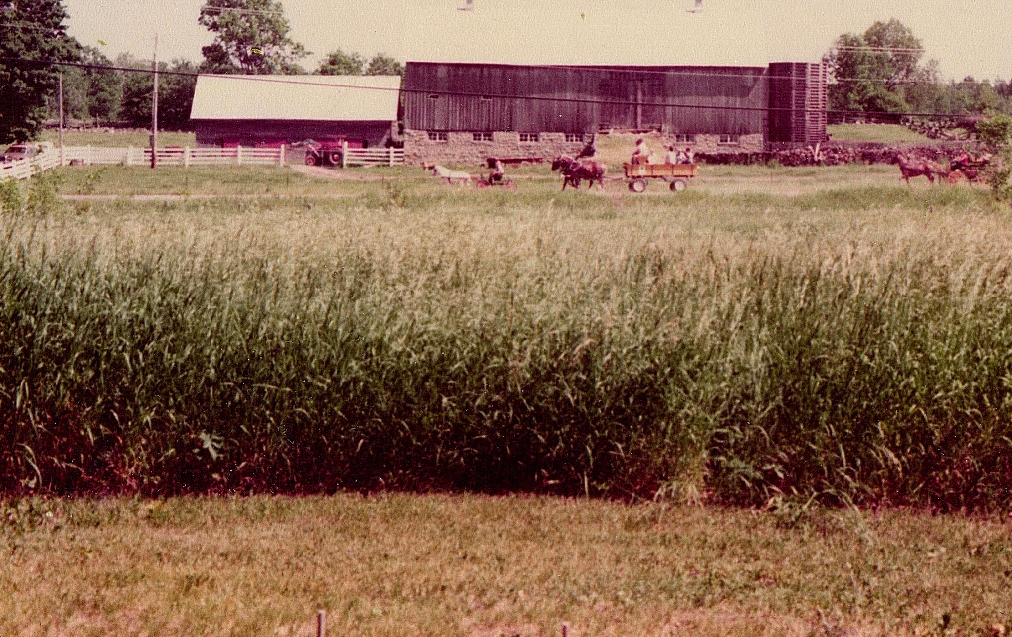 Korry's farm