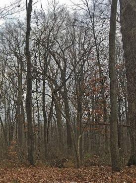 bare trees 2