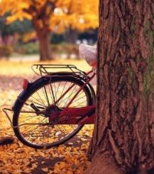 old red bike 2
