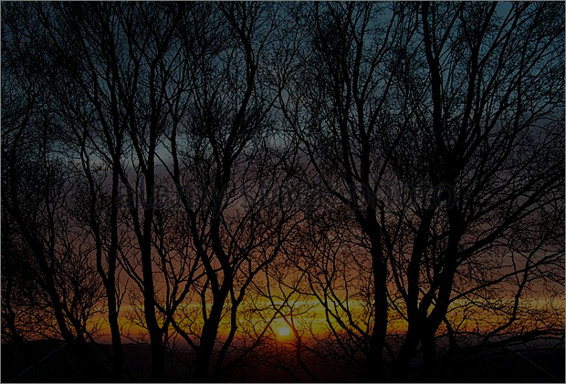 bare trees sunset