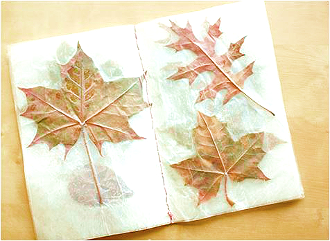 leaves in a book