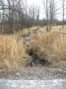 Creek behind the house0001