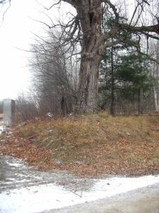 Tree near the tracks0001