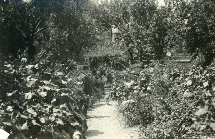 Matheson House garden 2