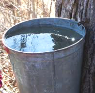 maple syrup bucket.jpg