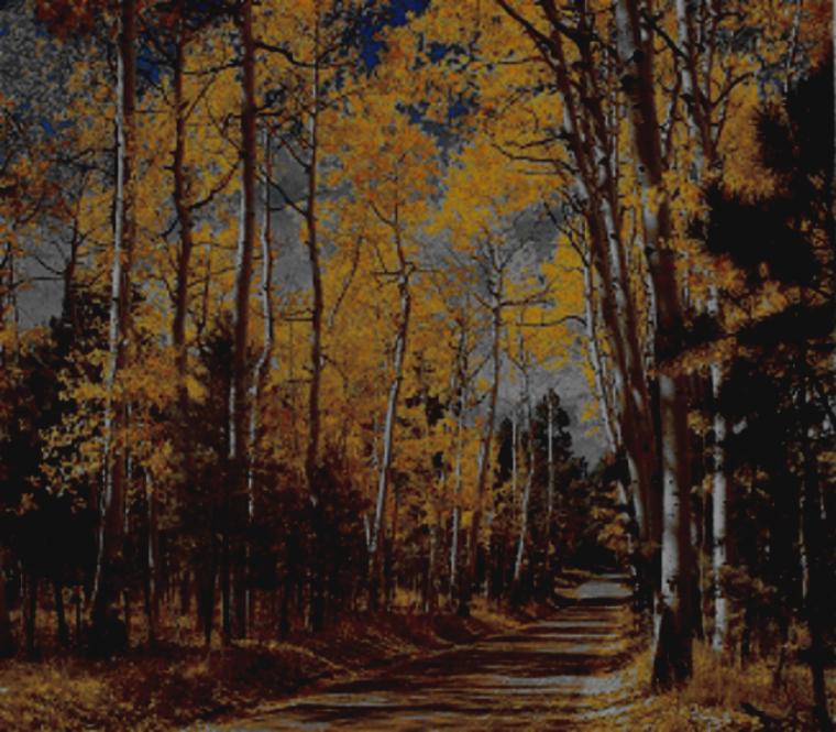 bare trees golden