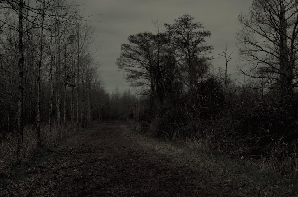 late fall road
