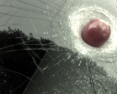 tomato windshield